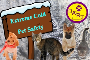 Cold Pet Safety